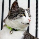 Best Cat Collar